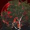 The Sycamore Tree and The Blood Red Moon.jpg