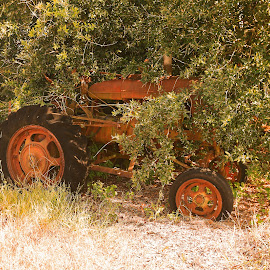 Antique abandoned tractor by Ron Olivier - Transportation Other ( antique abandoned tractor,  )