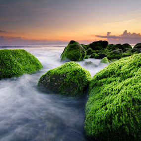 The Green Rocks by Eggy Sayoga - Landscapes Beaches ( waterscape, rock, long exposure, seascape, beach, sunrise, motion, landscape )