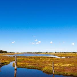 A beautiful sunny day !  by Faisal Enam - Landscapes Prairies, Meadows & Fields ( australia, bluesky, newcastle, landscape, swamp,  )