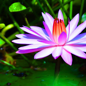 by Nazeri Mamat - Nature Up Close Flowers - 2011-2013