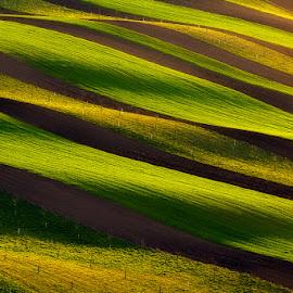 Moravian stripes by Pawel Uchorczak - Landscapes Mountains & Hills ( lit, moravia, haha, khja, uchorczak, landscape )