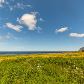 Sunny day by Benny Høynes - Landscapes Prairies, Meadows & Fields ( sea, meadows, flowers, sun, norway )