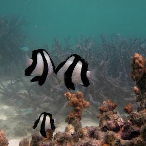 Fishin' for a Kissin' by Michael Nania - Animals Fish ( love, marine, kiss, underwater, fish, sea, ocean )