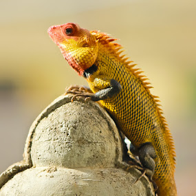 Thinking by Vinoth Kumar - Animals Reptiles