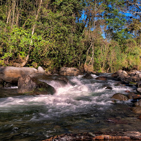 river and trees by Cristobal Garciaferro Rubio - Landscapes Forests ( water, tree, morninig, rocks, alder trees, river )