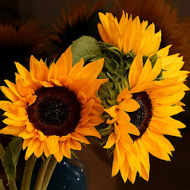 Sunflowers by Chrissie Barrow - Flowers Flower Arangements ( stigma, orange, vase, stamens, petals, green, sunflowers, indoors, brown, stems, cut, flowers )