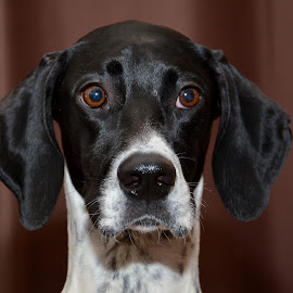 by Mark Butterworth - Animals - Dogs Portraits