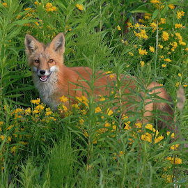 good day to smell the flowers by Mick Leppien - Animals Other