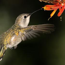 by Gérard CHATENET - Animals Birds (  )