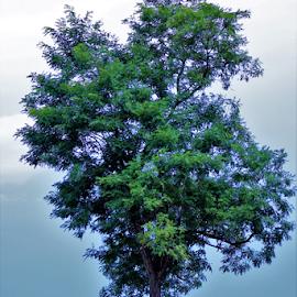 Blue Tree by Leah Zisserson - Landscapes Prairies, Meadows & Fields ( field, tree, blue, virginia, landscape,  )