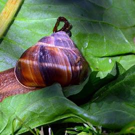 Slug by Danila Mircea - Animals Other