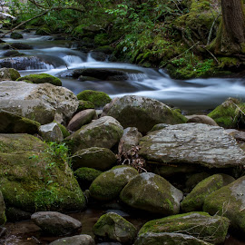 Mountain Stream by Thomas Shaw - Landscapes Waterscapes ( stream, green, tennessee, moss, the great smoky mountains, forest, landscape, woods, photography, national park, national forest, mountains, trees, landscape photography, rocks, smoky mountains, river )