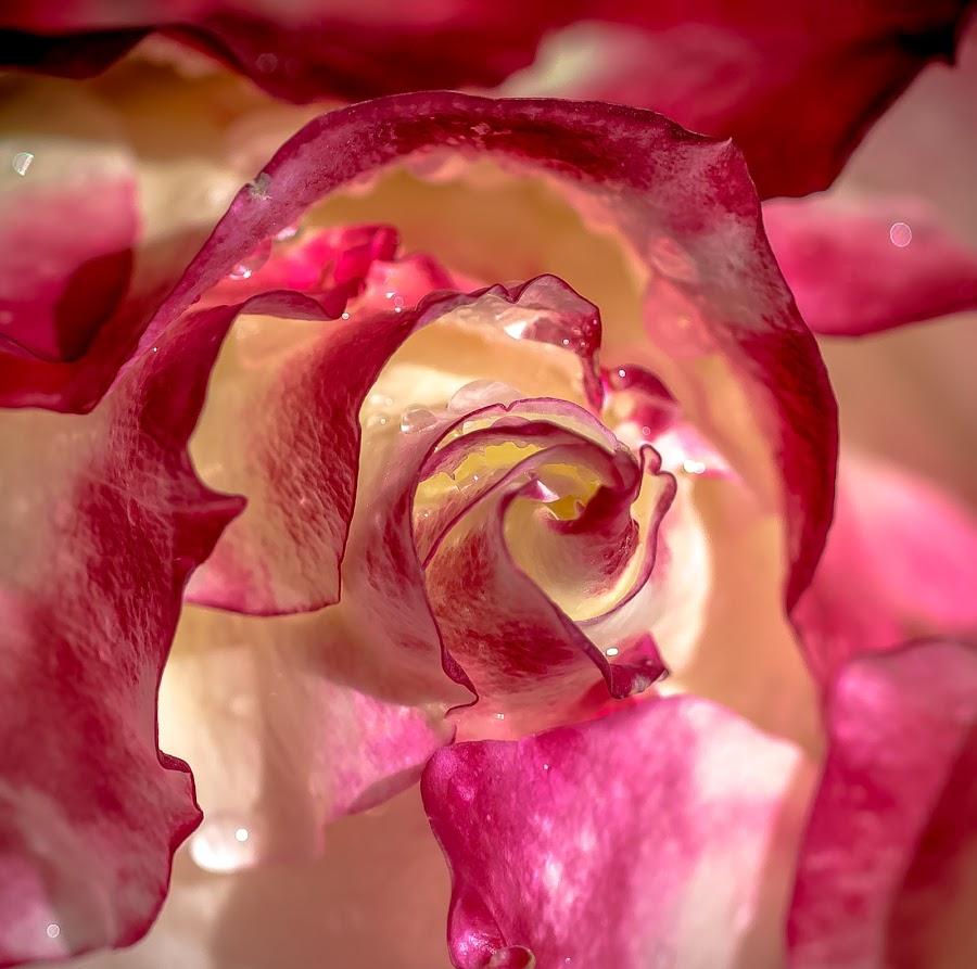 by Jackie Eatinger - Flowers Single Flower ( july 11,  )