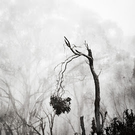 alone by Sue Adorjan - Black & White Landscapes