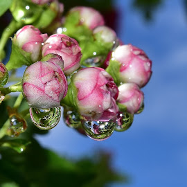 Water droplets. by Denton Thaves - Nature Up Close Natural Waterdrops ( water droplets )
