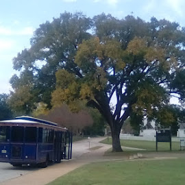 by Christopher Harris - City,  Street & Park  Historic Districts ( trolley, village, tree, tourism, historic )