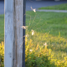 by Stacy Brown-Austin - Nature Up Close Webs