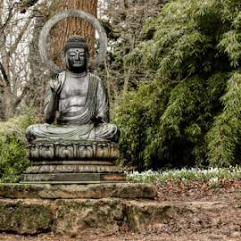 Buddha and Snowdrops by Jackie Matthews - City,  Street & Park  Vistas ( winter, buddah, snowdrops, trees, arboretum, Buddhism,  )