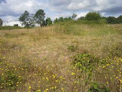 Photo 1 / 2 - June 2017 Parched Acid Grassland, Surrey (dated Sept 2014)