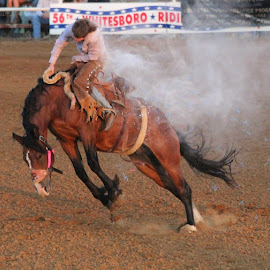 Hanging in there by Jeanene Leonard Galewaler - Animals Horses ( horse, cowboy, bucking, rodeo )