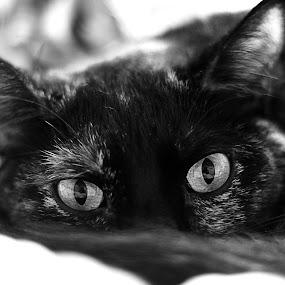 by Mallory Walsh-Ruggiero - Animals - Cats Portraits