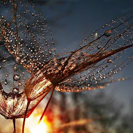 Kisses In The Twilight by Marija Jilek - Nature Up Close Natural Waterdrops