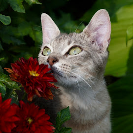 Kitten & Flowers by Lynn Andrasko - Animals - Cats Portraits