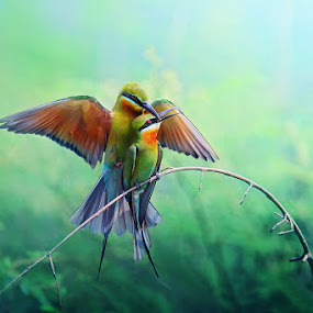 LOVE by Sasi- Smit - Animals Birds