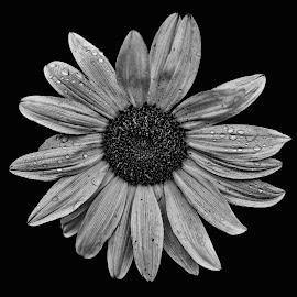 X-Treme  by Abbey Gatto - Black & White Flowers & Plants