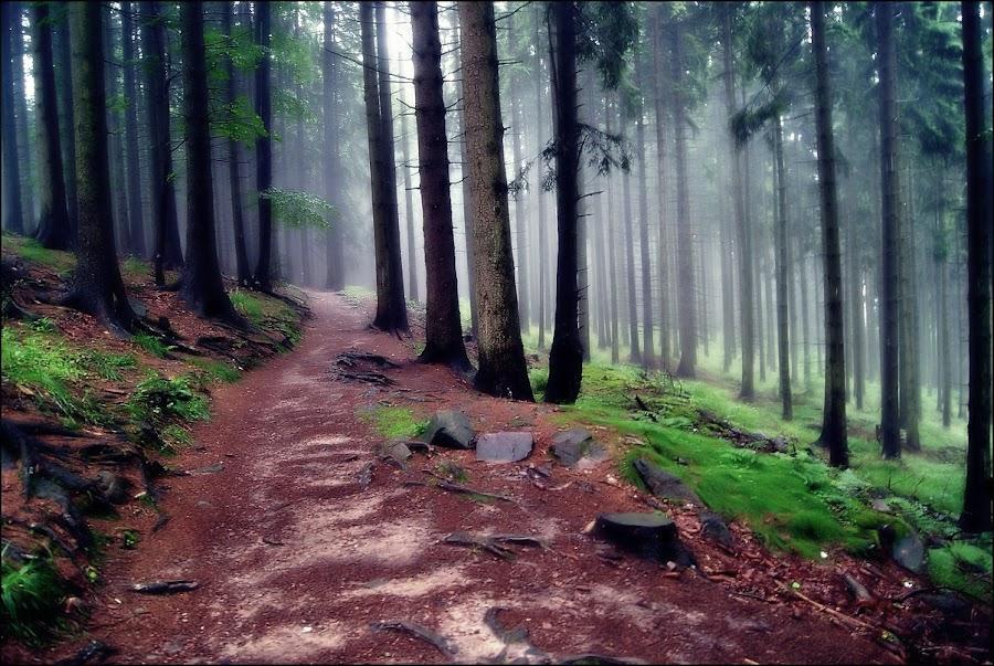 Miedzygorze by Marta Bednarska - Nature Up Close Trees & Bushes ( trees fog )