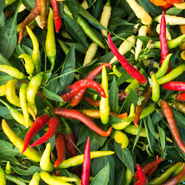 Chillies by Andrew Moore - Food & Drink Fruits & Vegetables
