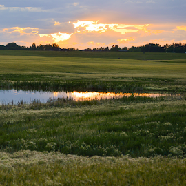 Fields And Ponds by Sylvia Meier - Landscapes Prairies, Meadows & Fields ( nature, reflections, landscape, pond, fields )