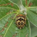 Picasso Bug