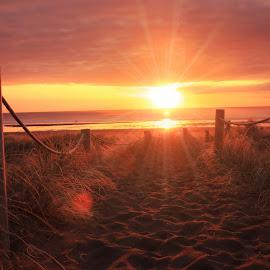 Piha Beach Sunset by Jomy Jose - Landscapes Beaches ( piha beach, sunset, auckland, beach, new zealand )