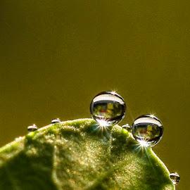 duo.... by Kawan Santoso - Nature Up Close Natural Waterdrops