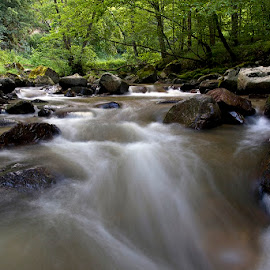 by Siniša Almaši - Nature Up Close Water ( forest, view, rocks, nature, waterscape, stones, river, water, landscape, colours )