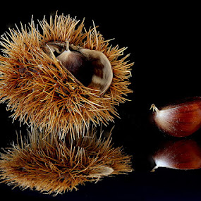 Chestnuts by Michael Schwartz - Artistic Objects Other Objects (  )