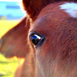 Glance...... :-) by Ana Wisniewska - Animals Horses