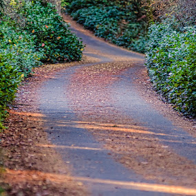 up and away by Eddie Murdock - Landscapes Forests ( fall, trail, loop road, path, forest, walkway, road )