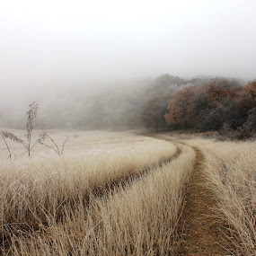frosty & foggy by Cosmin Popa-Gorjanu - Landscapes Weather ( field, foggy, fog, frost, forest, road, vegetation, frosty )