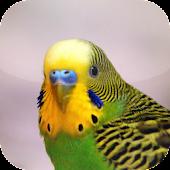 Suara Burung Parkit APK for Ubuntu