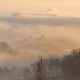 fogy morning by Tomaž Lipovec - Landscapes Prairies, Meadows & Fields ( clouds, foggy, fog, trees, forest, landscape )