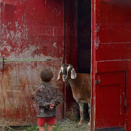 Talk To Me by Millieanne T - Digital Art Places ( red, barn, goat, boy )