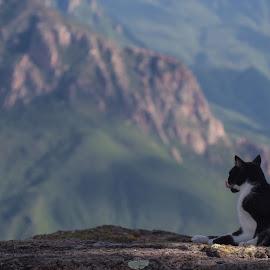 Wild Cat by Sergio Tohtli - Animals - Cats Portraits
