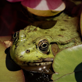 by Denise O'Hern - Animals Amphibians
