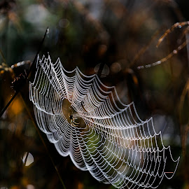 Spider & Webb by Duncan McNaught - Nature Up Close Webs ( nature up close, spider, web, spider web )