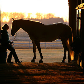 Sunset Silhouette by Emma Reeves - Animals Horses ( equine photography, irish sport horse, horses, silhouette, emma rose photography,  )