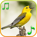 Birds Sounds Ringtones APK for Kindle Fire