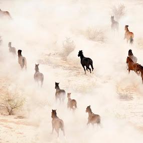 Wild Mustangs 8 by Dale Kesel - Animals Horses ( ultralight plane, mustang, dream-like, desert, arizona, dust, southwest, wild horses )